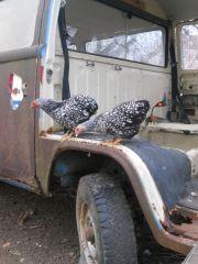 T2: früher Rettung jetzt Hühnerstall